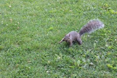 ecureuil parc montreal