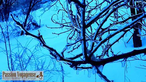 hiver glace marche nature