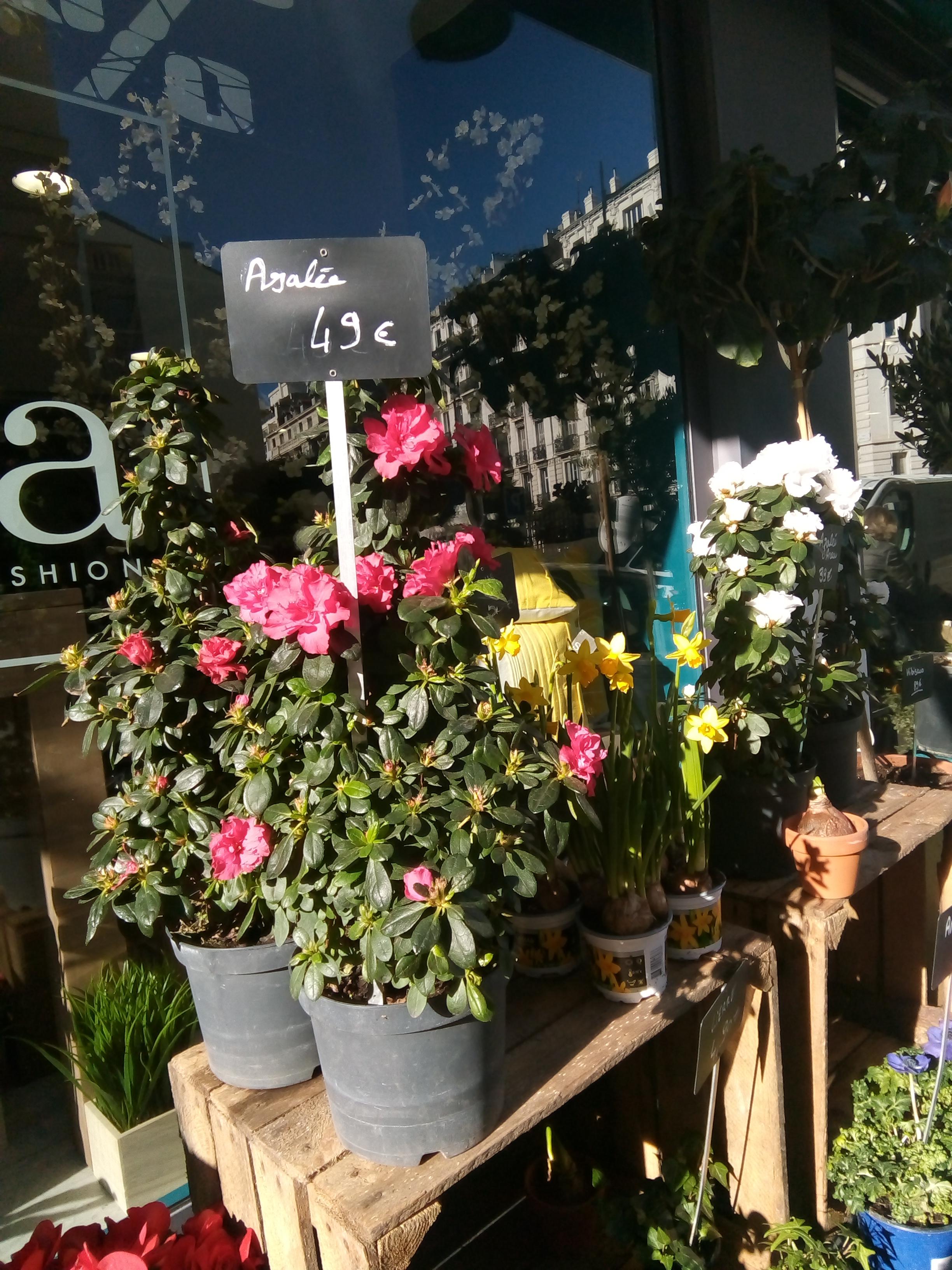nice fleurs soleil hiver